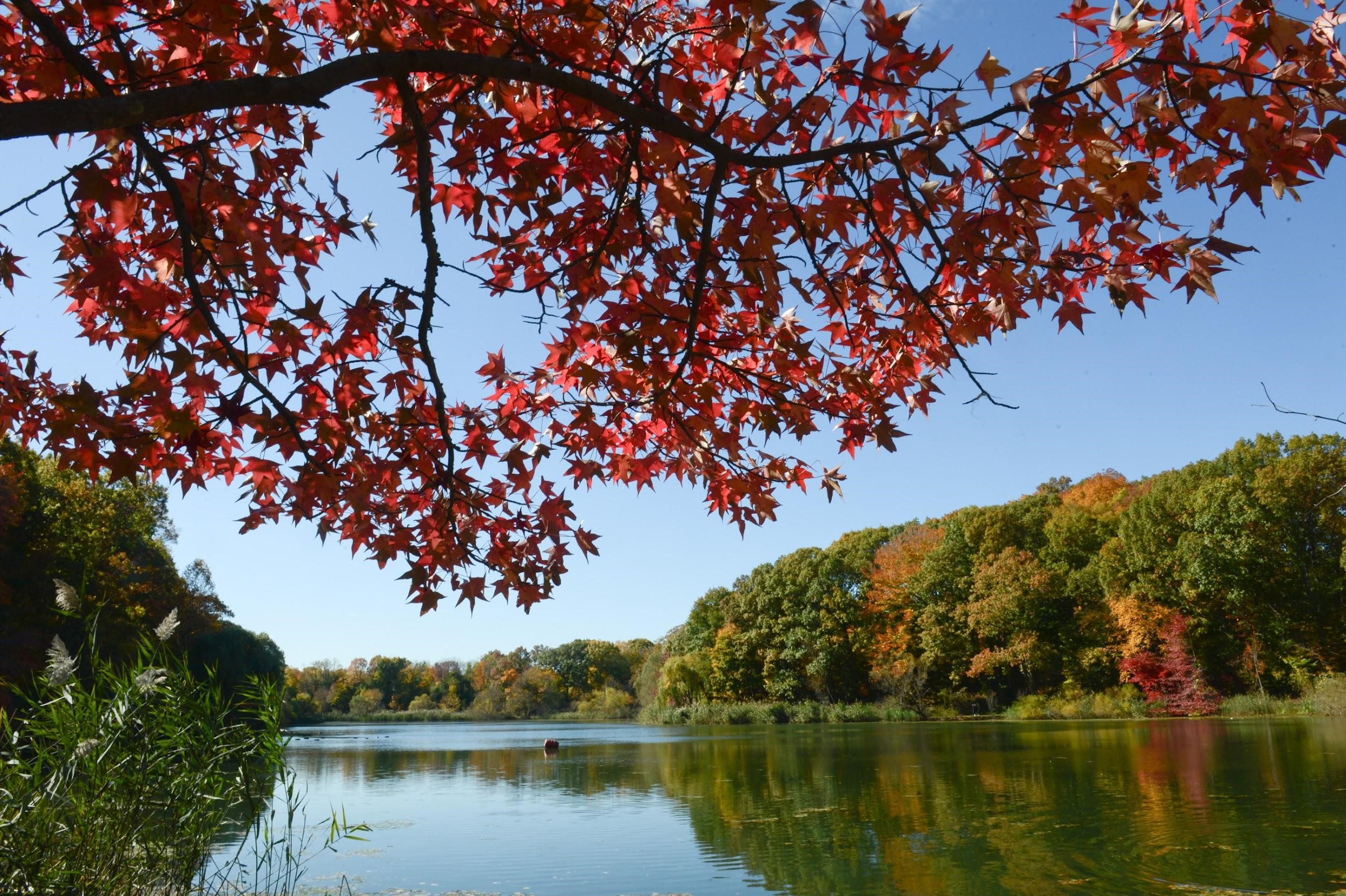 Fall Foliage In Alley Pond Park Queens